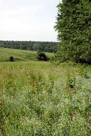 artenreiches Grünland