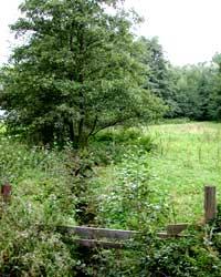 NSG Steinbachtal